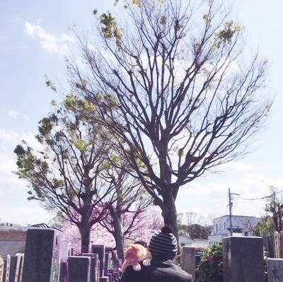 200404-ohaka.jpg